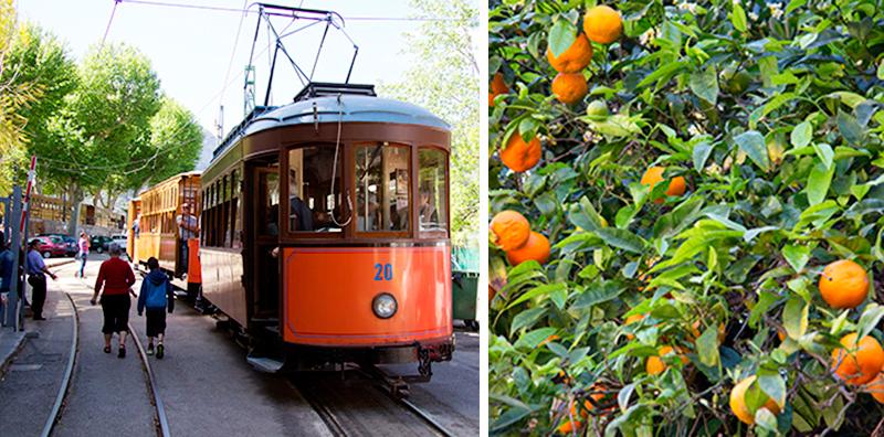 På turen med veterantoget (i baggrunden) til Sóller kan du næsten røre appelsinerne, du kører forbi. Fra Sóller Station kører sporvognen videre til Port de Sóller.