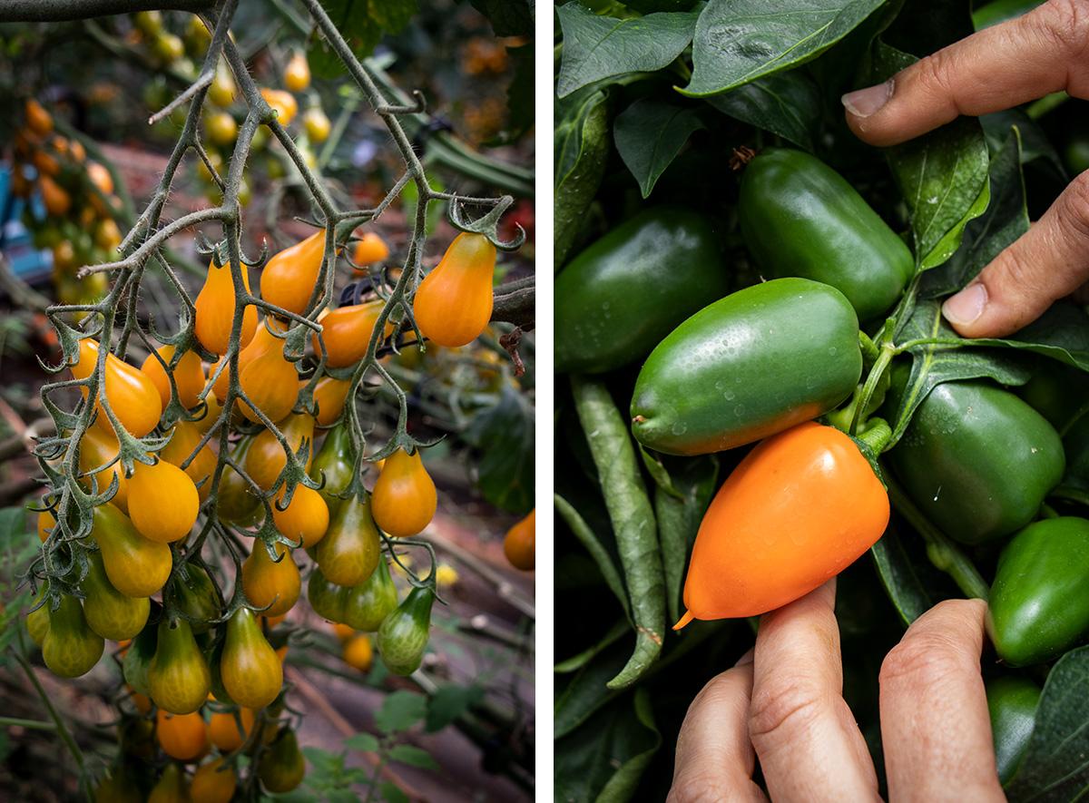 Besøg Clisol i Almerias plastikhav, og se hvordan man dyrker bæredygtige grøntsager.